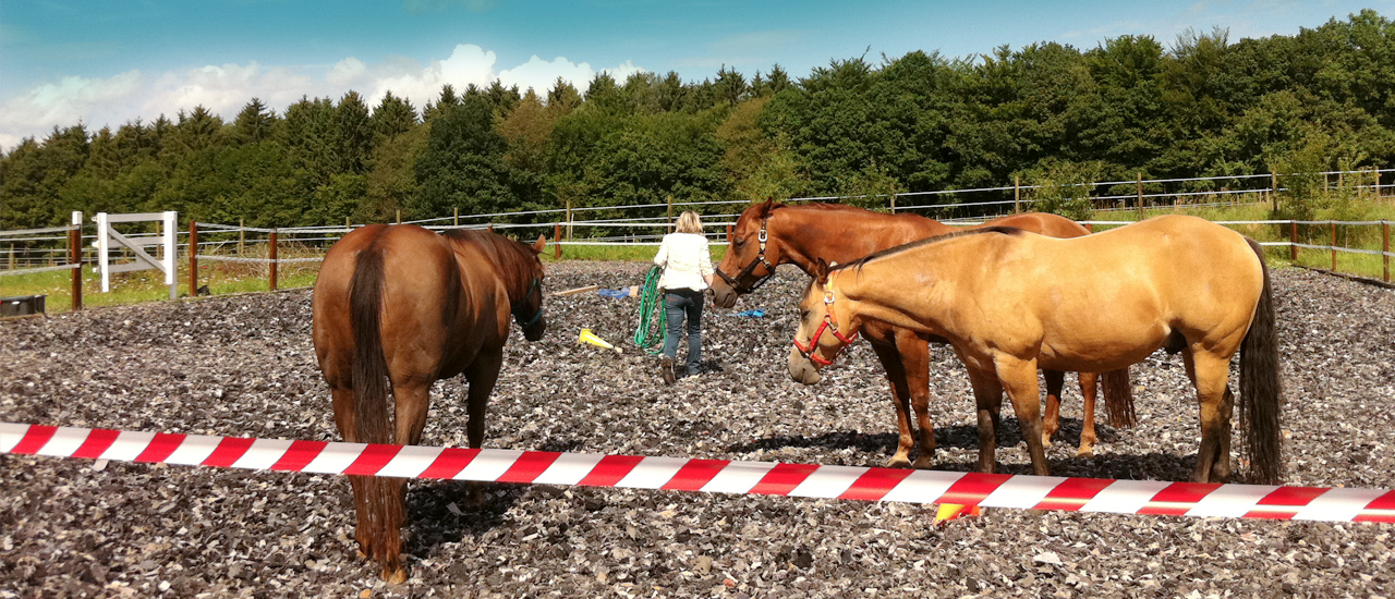 Pferdebasiertes Managementtraining